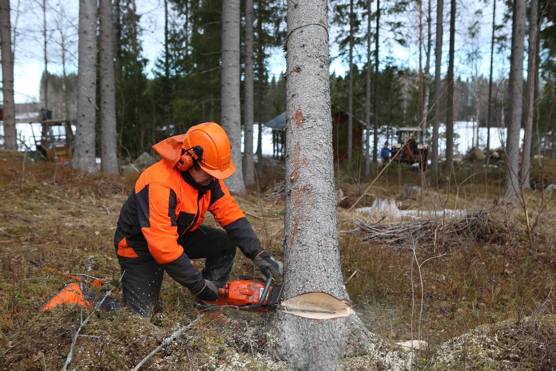2020 Activitats auxiliars en conservació i millora de forests